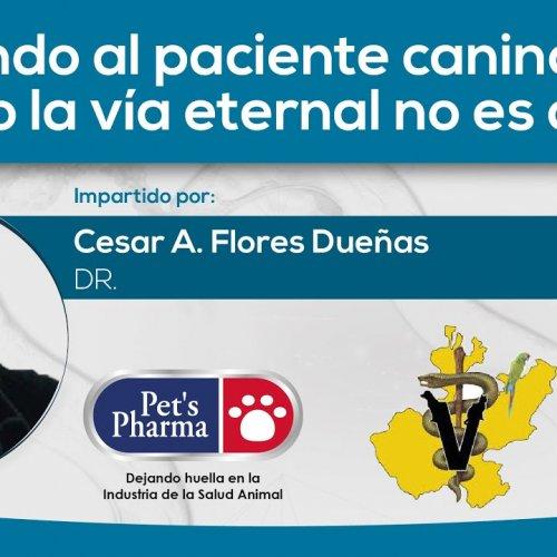 Nutriendo al paciente canino grave cuando la vía enteral no es opción