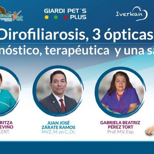 Dirofiliarosis, 3 ópticas: diagnóstico, terapéutica y una salud